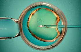 PMA pour toutes et conservation d'ovocytes hors raisons médicales : les décrets publiés